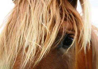 Imagen de caballo