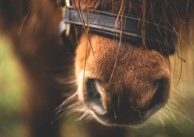 Boca de caballo